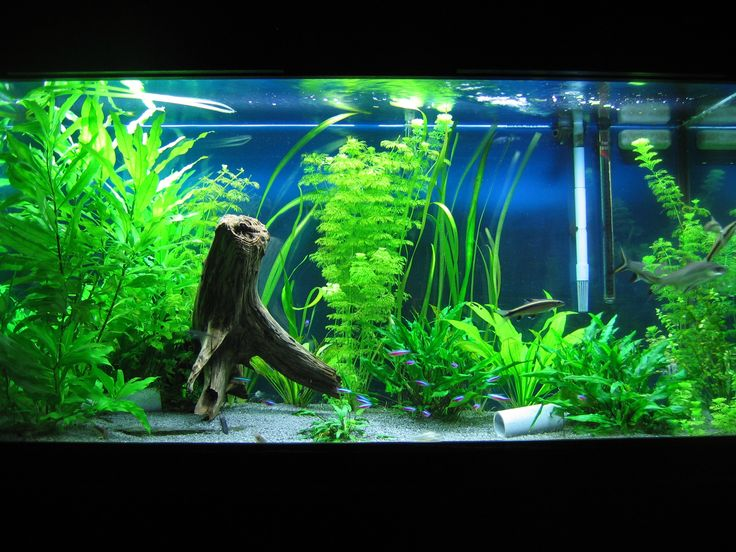 Goldfish aquarium setup google search gone fishing for Aquarium decoration idea