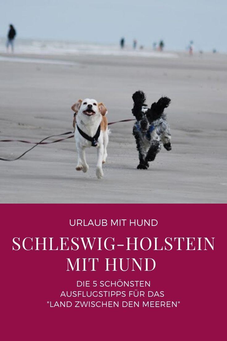 5 Ausflugsziele Mit Hund In Schleswig Holstein In 2020 Urlaub Mit Hund Ausflug Schleswig Holstein