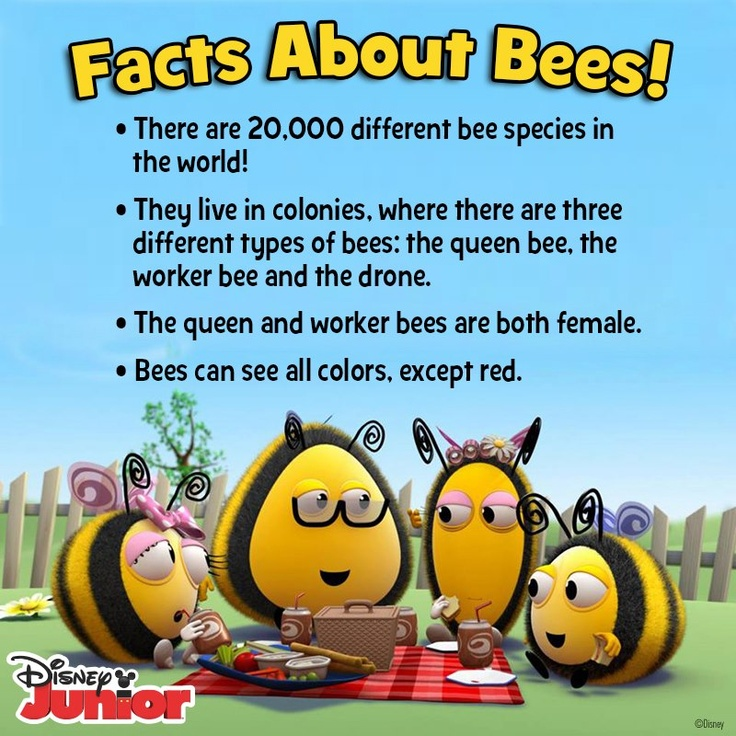 Learn more about Bees from DIsney Junior's The Hive! # ...