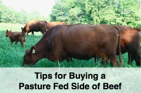 How to buy a side of pasture-fed organic beef including where to find farmers, how much it costs and the health benefits that pasture-fed beef offers.