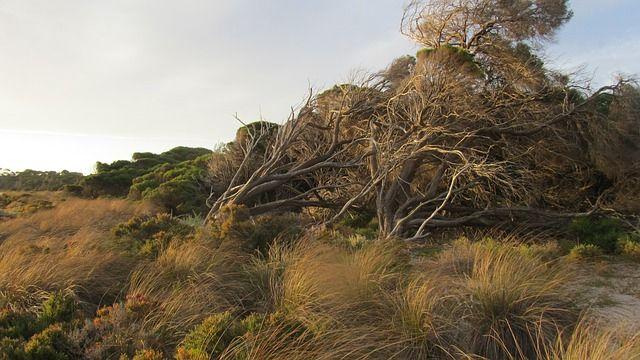 Rottnest Island, Island, Australia