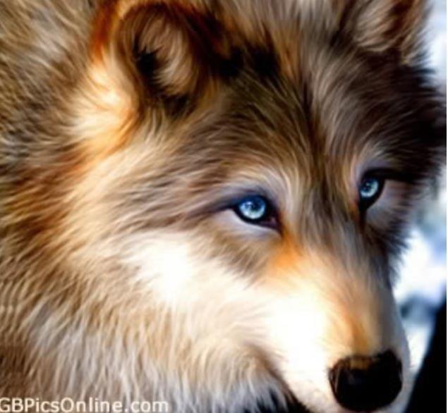 e361d2cbb57d4bac0dcc8e85bf804969--wolf-eyes-anime-animals.jpg