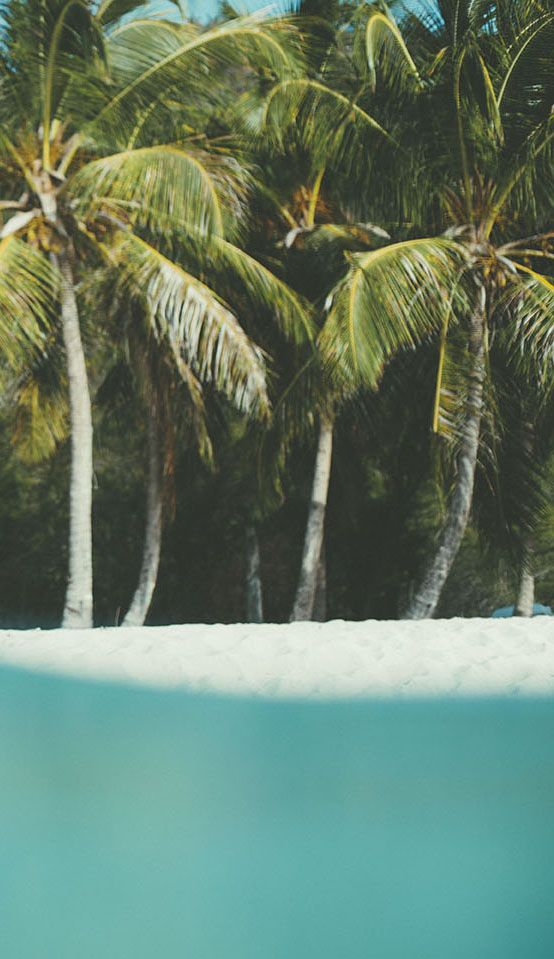 Island State Co island life inspo || palm trees, ocean breeze, sun, sand, salty ocean air, tropical island paradise || @Island State Co #islandstateco #islandlife #billabong