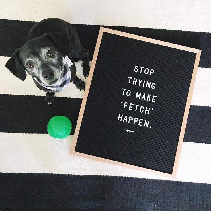 Image Result For Dog Letter Board Idea Funny Letters Mean Girl