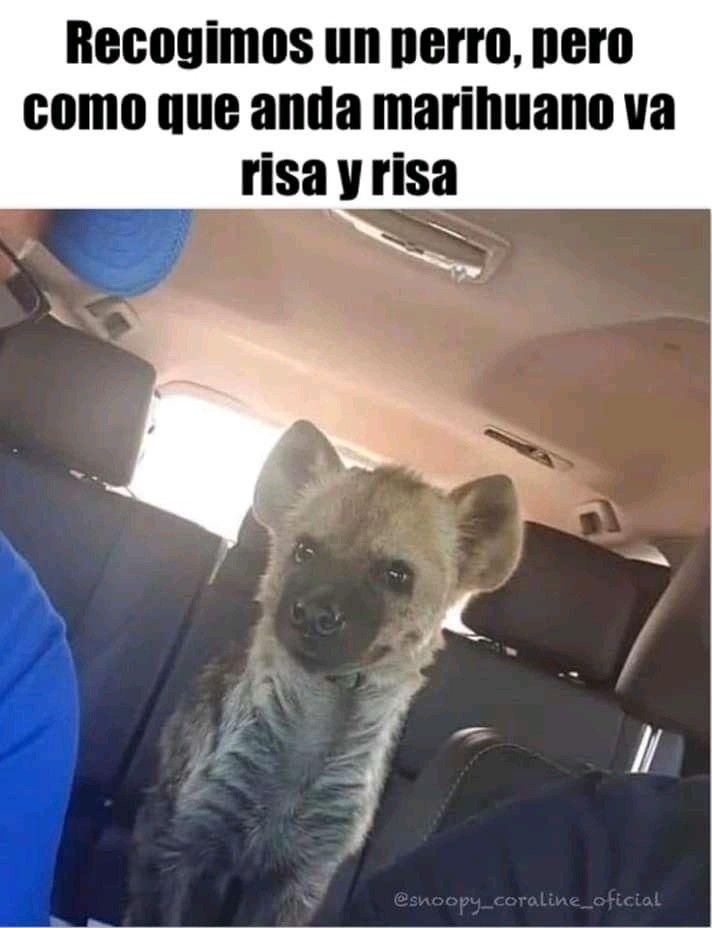 Pin De Nahuel Borda En Funny Memes Divertidos Memes Para Reirse Perros De La Calle
