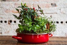 """Quer ter temperos frescos sempre à mão, mas não tem espaço ou aptidão para a jardinagem? Monte um arranjo decorativo e """"saboroso"""", usando no lugar do vaso, uma panelinha de ágata (esmaltada) - que além de decorar pode, eventualmente, ser utilizada para cozinhar -, quatro ervas aromáticas: hortelã, tomilho, manjericão verde e manjericão roxo e, também, pimenta. Veja o passo a passo elaborado pelas floristas Marcia Sorgenfrei e Sandra Kelm, da Agapanthus Floricultura, em Curitiba"""