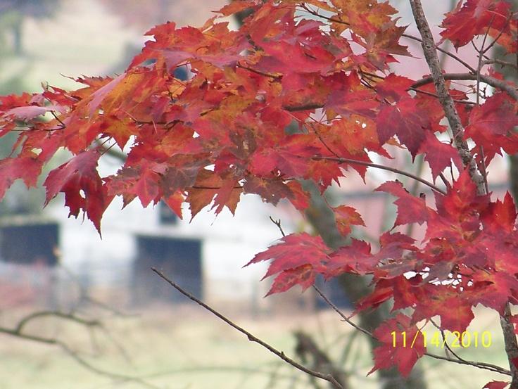 fallAutumn Splender, Fall Beautiful, Amazing Autumn, Farms Country, Autumn Leaves, Fall Autumn, Favorite, Fall Photos, Beautiful Pictures