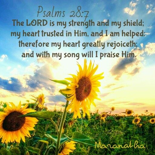 Psalms 287 KJV The LORD Is My Strength And My Shield