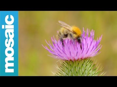Can cities save our wild bees? | Cities | theguardian.com
