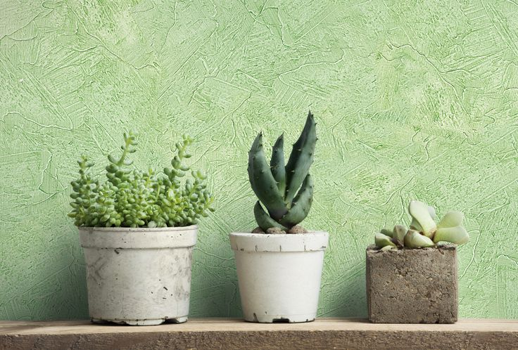 Green wall decorated with Valpaint Anticando