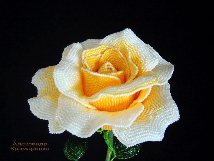 Розы Александра Крамаренко: Солнечная роза