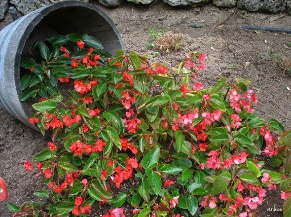 Új filléres őrület a kertbe - Ennél szebbet még nem láttál! második oldal