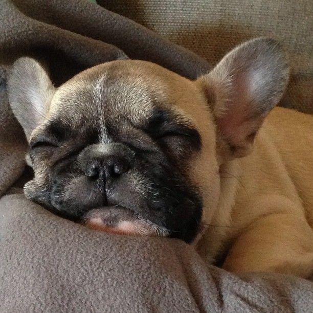 Sleepy little Hemmo