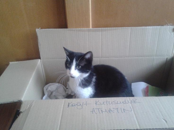 25 TL'lik hediye çekini duyan Zibidi, dayanamayıp kağıt kutusunun içine zıplamış! Siz de en yakın dostunuzun bir kutu içinde çekilmiş fotoğrafını mailto: sosyalmedya@altincicadde.com'a gönderin, 25 TL değerinde hediye çekinin sahibi olma şansını yakalayın!