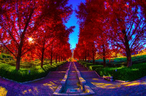 lane: Artists, God, Paths, Red, Autumn, Rainbows Color, Fall Trees, Pathways, Photography