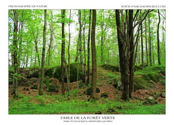 Fable de la forêt verte Prise à Shefford, Québec, Canada http://www.paskalrainville.com/