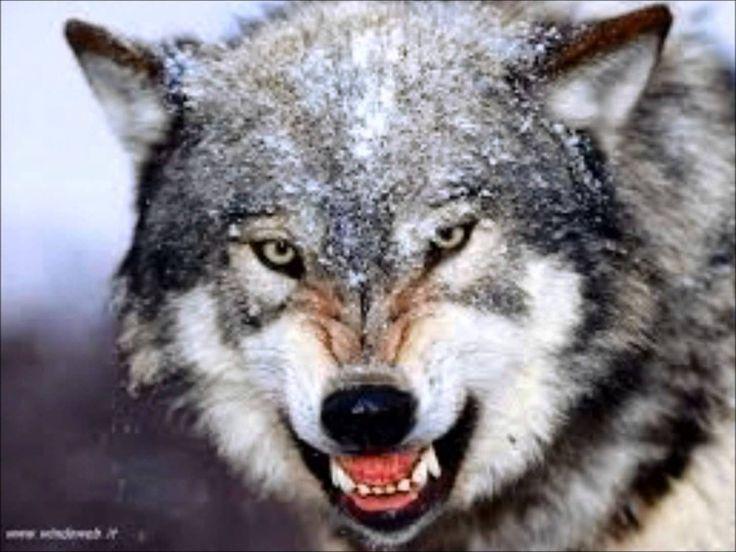 animali più pericolosi del mondo - Cerca con Google