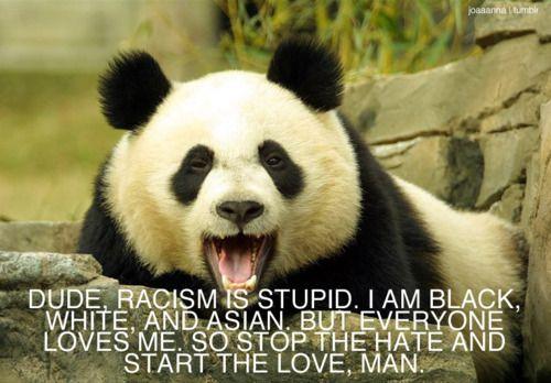Racism is stupid...be a panda. A lesson I should teach my students.:  Pandas Bears, Quotes, Black White,  Ailuropoda Melanoleuca, Funny Stuff, Pandabear,  Coon Bears, Giant Pandas, Animal