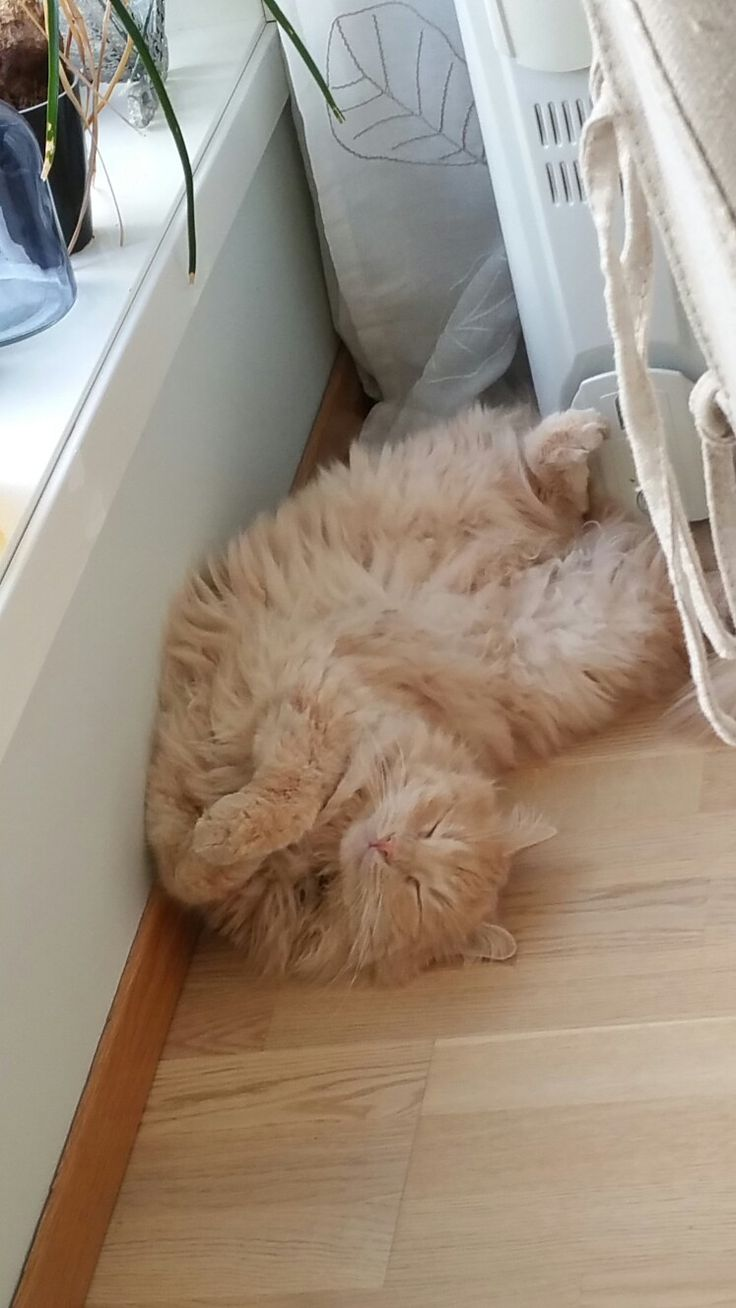 Our cat feel the feeling of friday