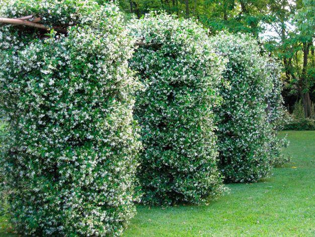 659 mejores im genes de jardin en pinterest plantas for Utiles de jardineria