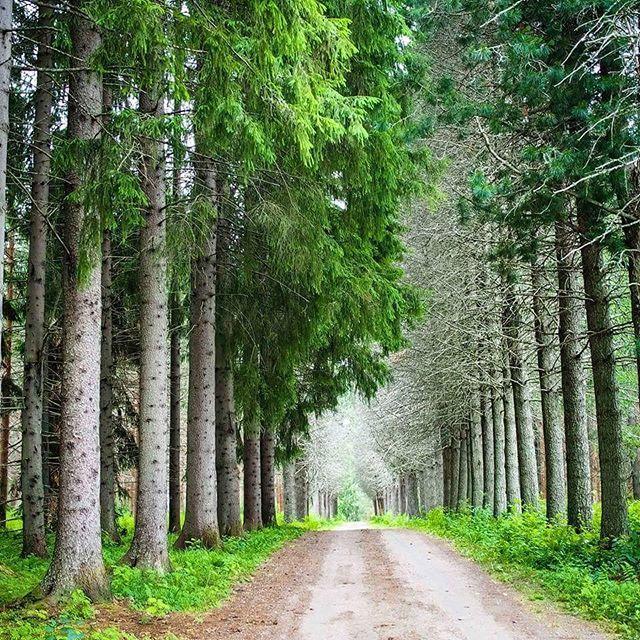 Forest road, Punkaharju, Finland. Nordic area.