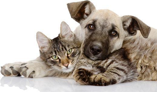Pulci Cani e Gatti, Antipulci per cani e gatti | Frontline Combo®
