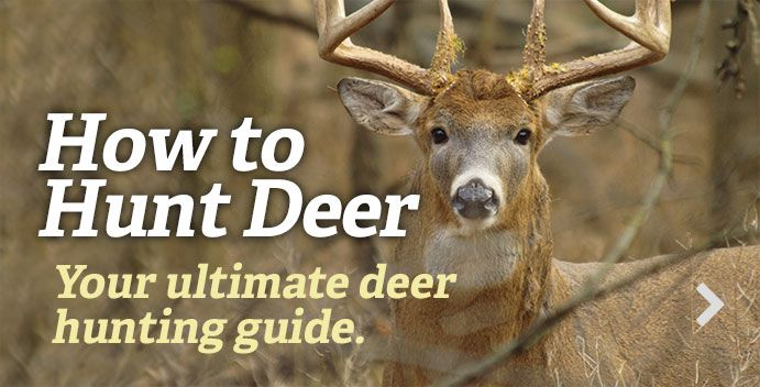 You Shot A Deer. Here's How To Find It.