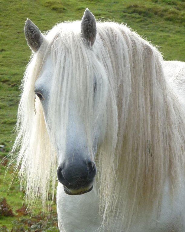 Dunedin Highland Ponies - 67 Photos - Agricultural ...