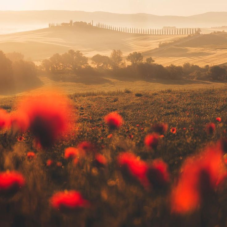 "1,413 gilla-markeringar, 37 kommentarer - Federico Penta (@fpenta) på Instagram: ""Such a beautiful morning in a poppies field in colorful Tuscany"""