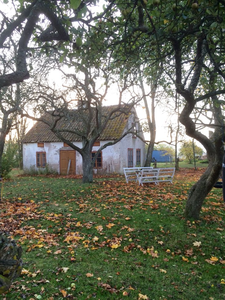 Gotlandshus i höst