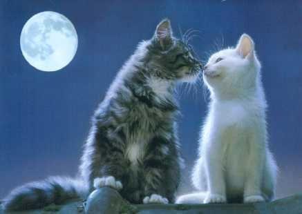aww muah!: Cats, Kiss, Animals, Pets, Kittens, Kitties, Kitty, Moonlight
