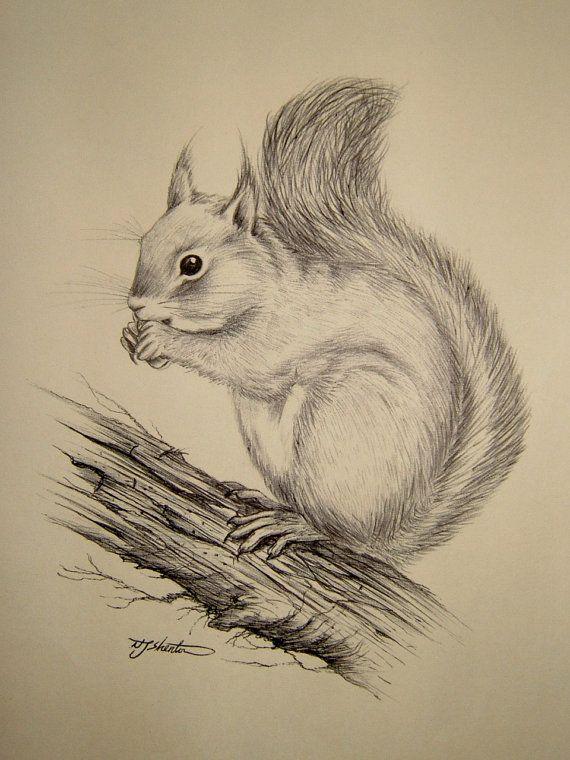 Vintage Ink Sketch Drawing of a Squirrel by QueensParkVintage