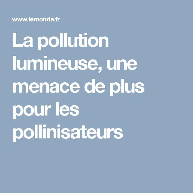 La pollution lumineuse, une menace de plus pour les pollinisateurs