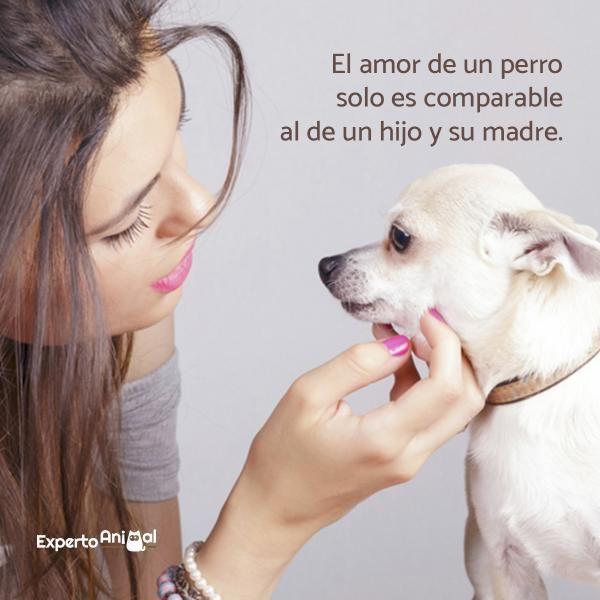 Frases De Perros Perros Frases Perros Y Animales Frases