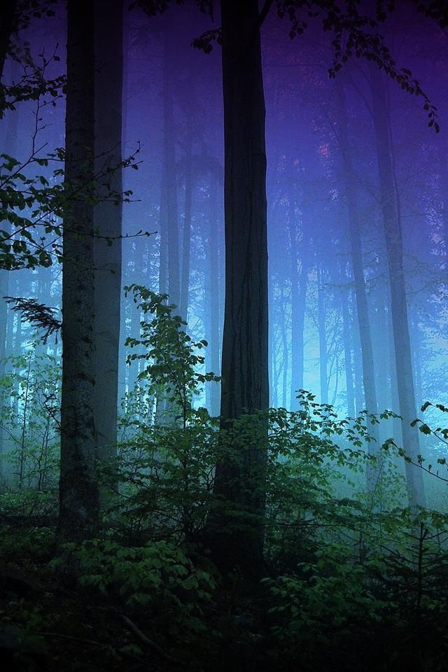 Forest at night...Lost?
