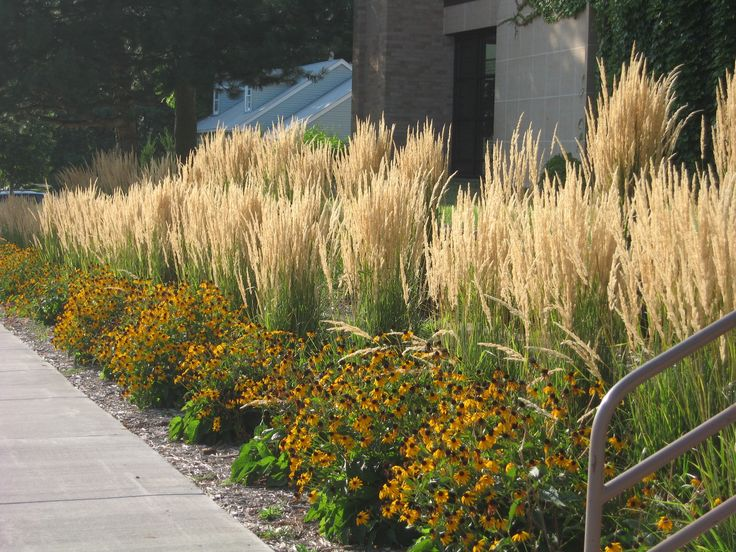 11 best images about front yard ideas on pinterest for Best ornamental grasses for landscaping