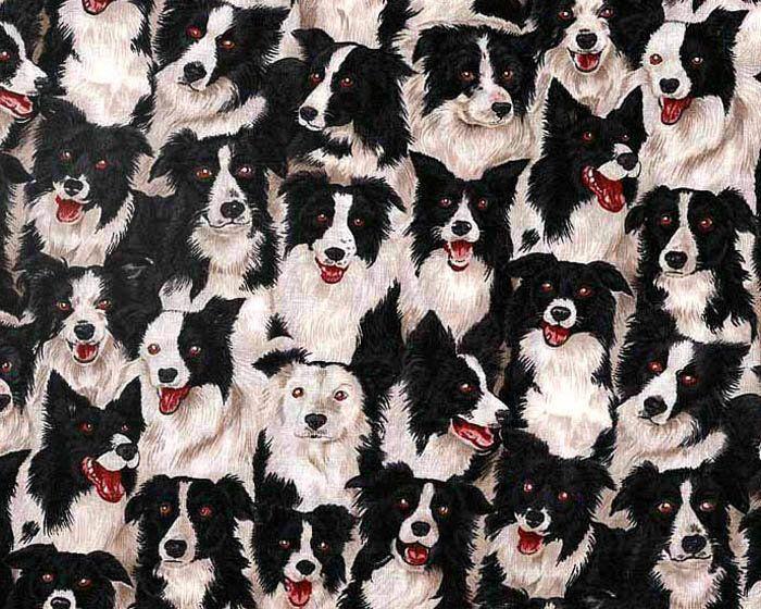 Border Collie Dog Fabric 5 Yards Makower Uk Craft Supplies And