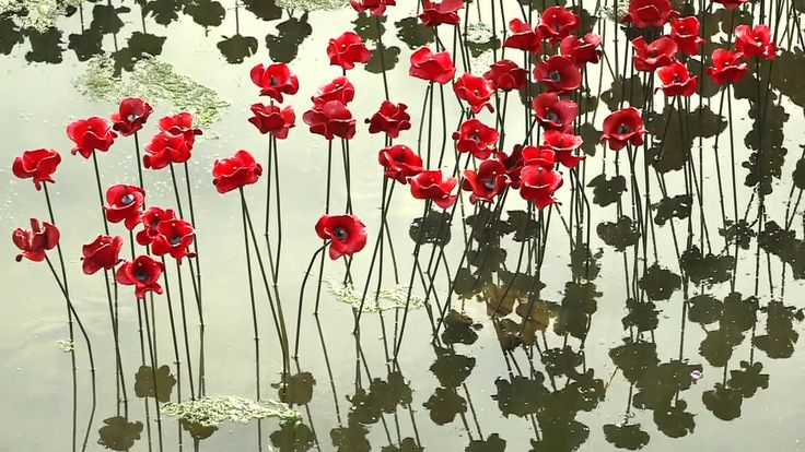 14-18 NOW and Yorkshire Sculpture Park present Wave as part of a UK-wide tour of the iconic poppy sculptures. See the Poppies at YSP until 10 January 2016.  Wave…