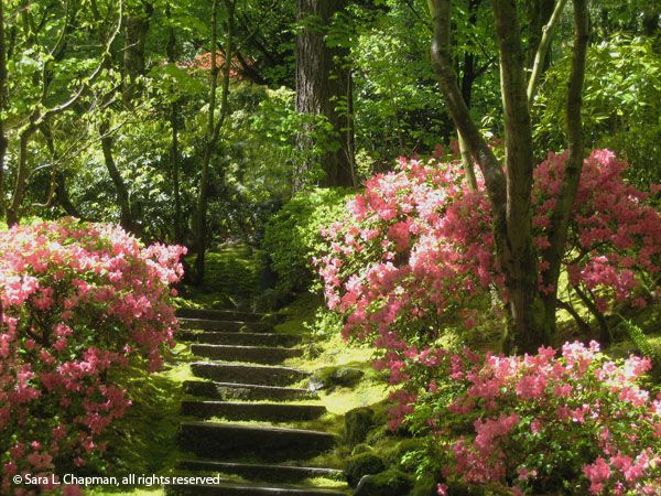 Awesome Steps In The Portland Japanese Garden.