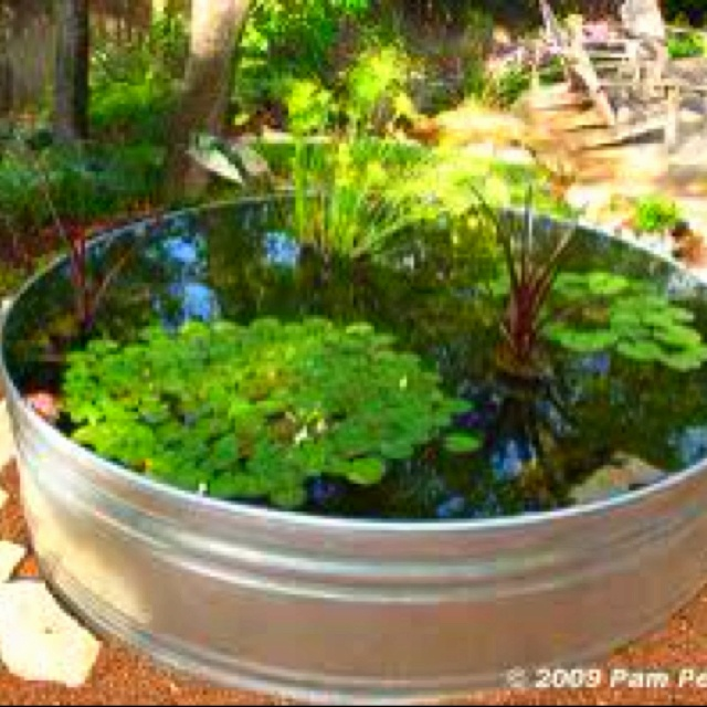 Pond in a pot!