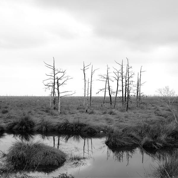 döda träd