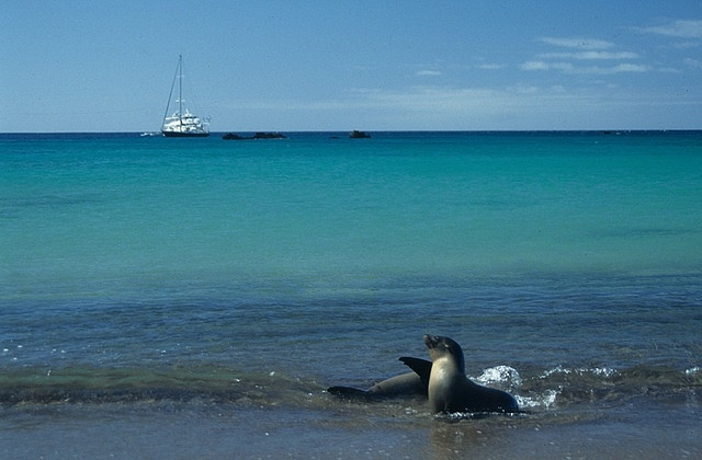 Galapagos Islands - sea lions with a view by Derek Keats, via Flickr