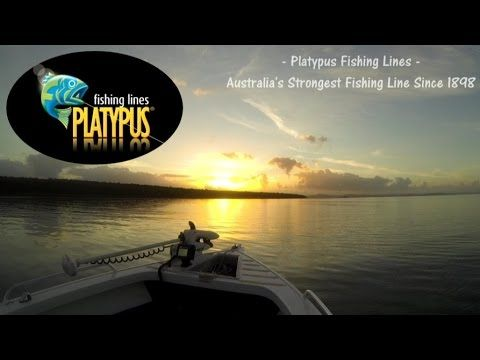 Fish That Snag - Platypus Fishing Line - YouTube #fishing #adventure #outdoors