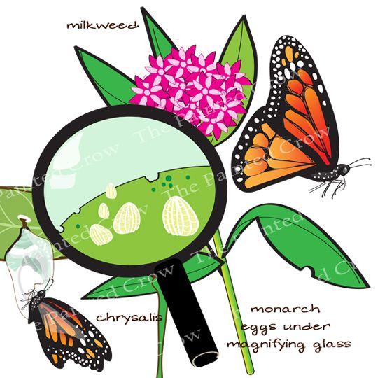 Clip Art   S...Spring Insects Clipart