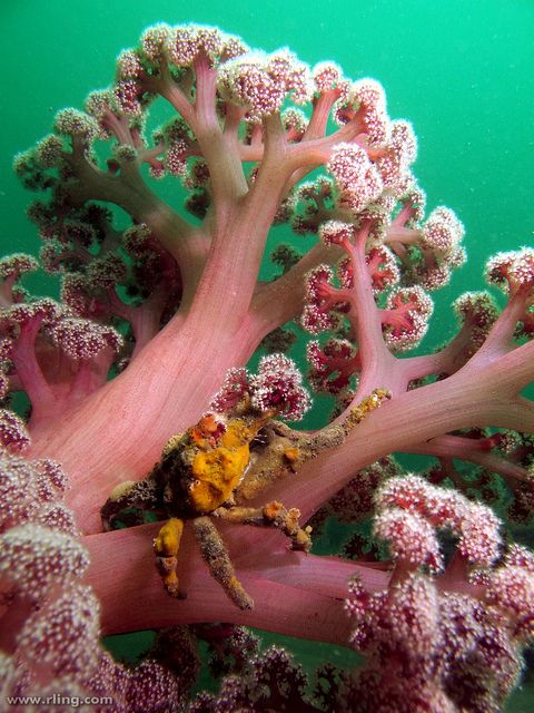 decorator crab and sea sponge relationship