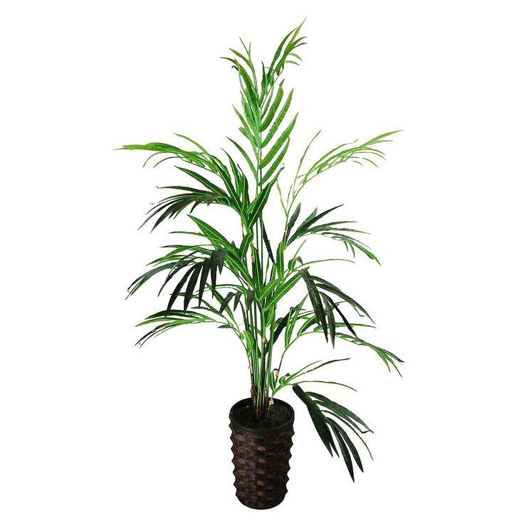best 25 palm plants ideas on pinterest palm house plants plants and plant leaves. Black Bedroom Furniture Sets. Home Design Ideas