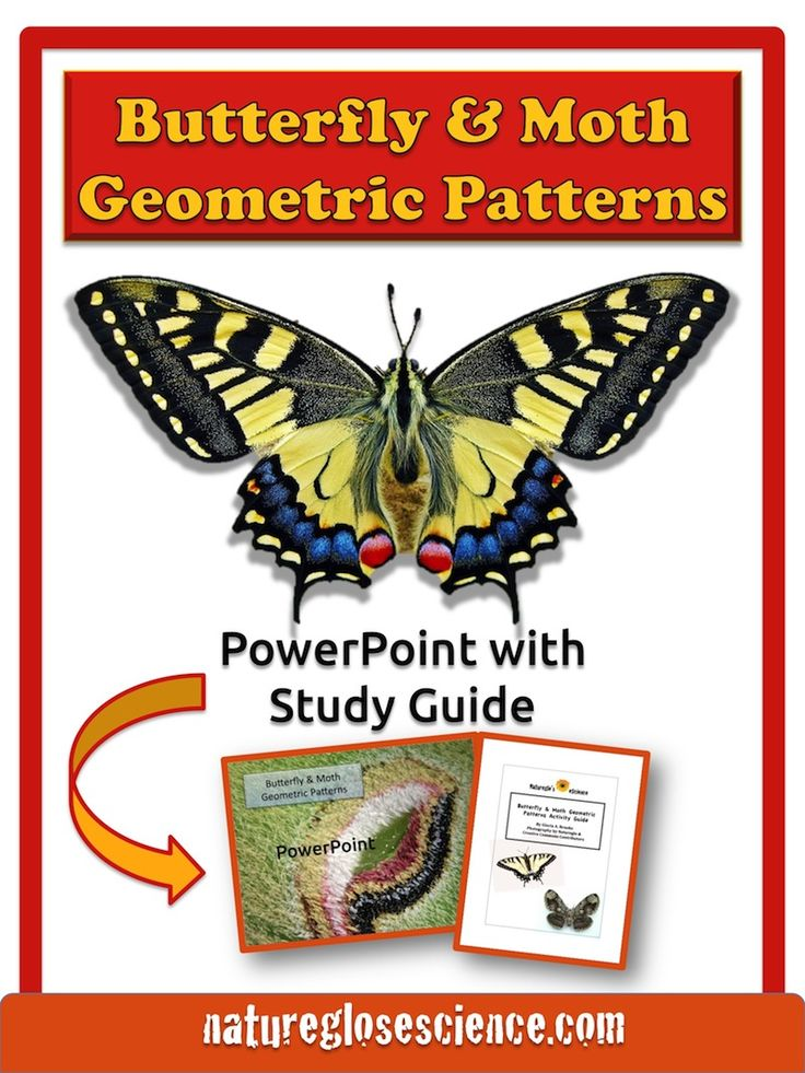 butterfly math worksheets, information about butterfly, butterfly math activities, butterfly lesson plans, butterfly activities, how many wings do butterflies have