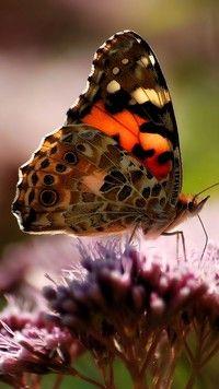 Rusałka osetnik na kwiatku