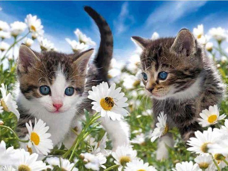 Hattyúk,Hattyúcsalád,Kutya és cica összebújva - nagyon aranyos kép,Állatok - gyönyörű cicák,Állatok - gyönyörű kutyus virágok között,Kutyus rózsák között,Cica a réten ,Cicák a teáscsészékben,Cicák a virágos réten,Aranyos kutyus, - jpiros Blogja - Állatok,Angyalok, tündérek,Animációk, gifek,Anyák napjára képek,Donald Zolán festményei,Egészség,Érdekességek,Ezotéria,Feliratos: estét, éjszakát,Feliratos: hetet, hétvégét ,Feliratos: reggelt, napot,Feliratos: egyéb feliratok ,Finomságok…