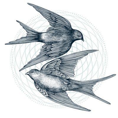 Two Swallows Art Print